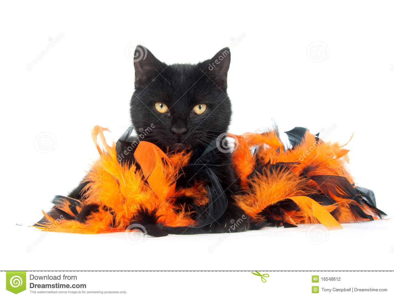 Black Cat With Black And Orange Feathers Stock Photography - Image ...