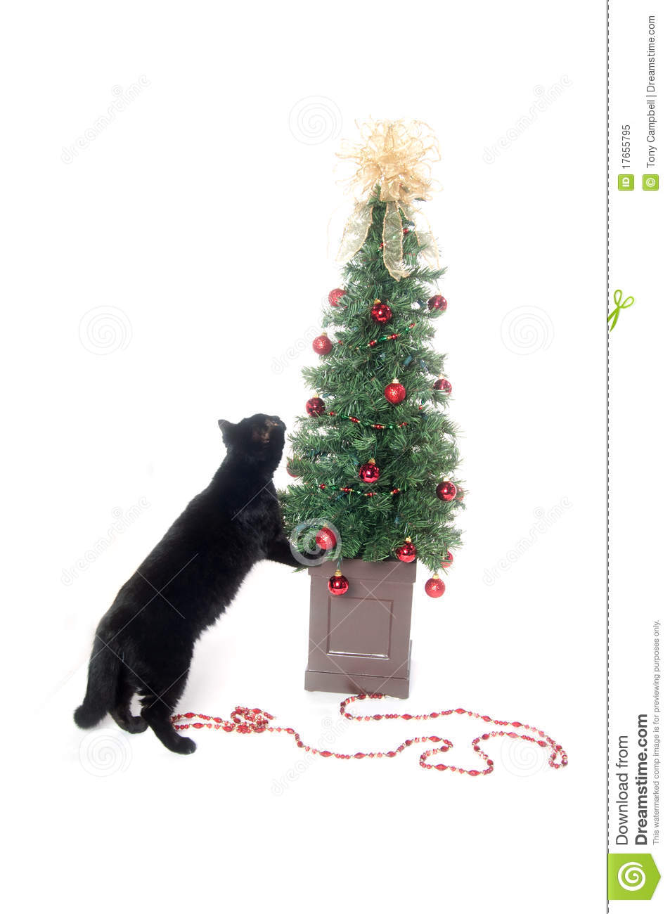 Black cat and christmas tree royalty free stock photo Christmas tree cat tower