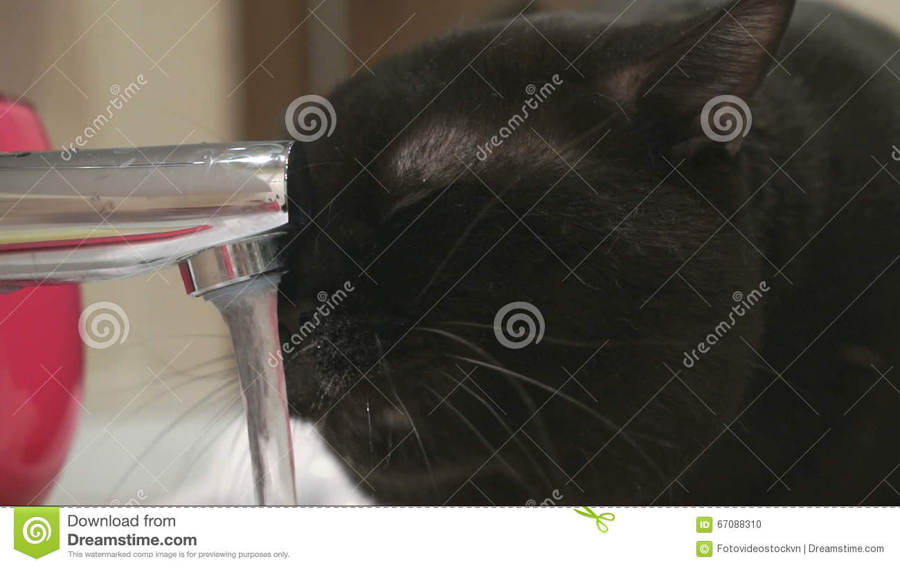 Black Cat Drinks Water From The Faucet Video Footage 67088310 ...