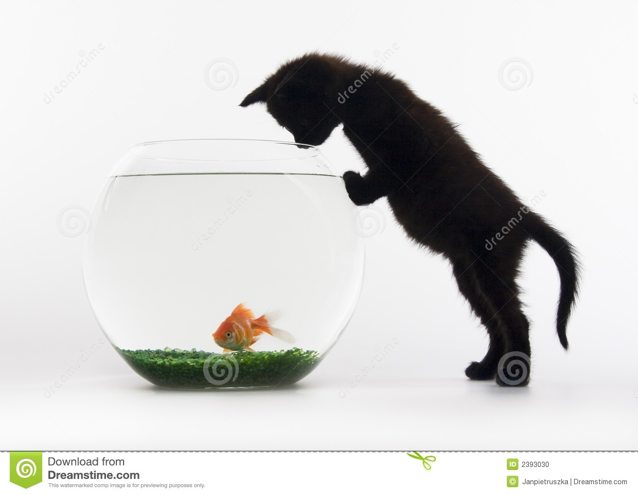 Black cat gold fish stock photo image 2393030 for Fish and pets unlimited