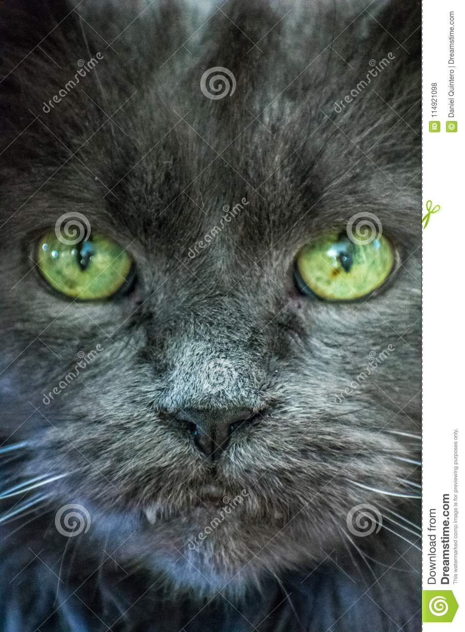 Black Cat Green Eyes Looking At Camera Stock Photo Image Of Flower