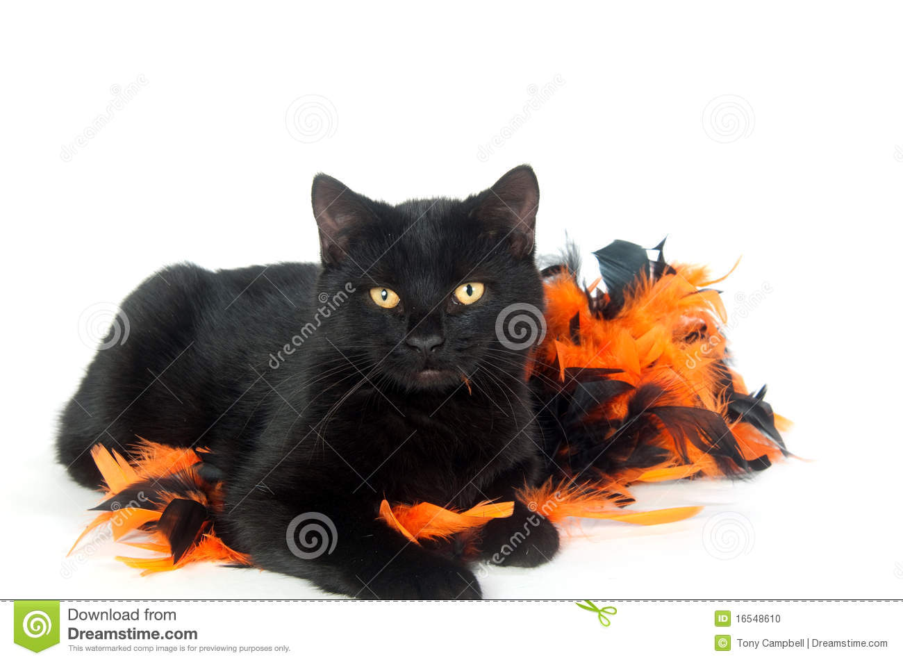 background black cat decorations halloween - Halloween Cat Decorations