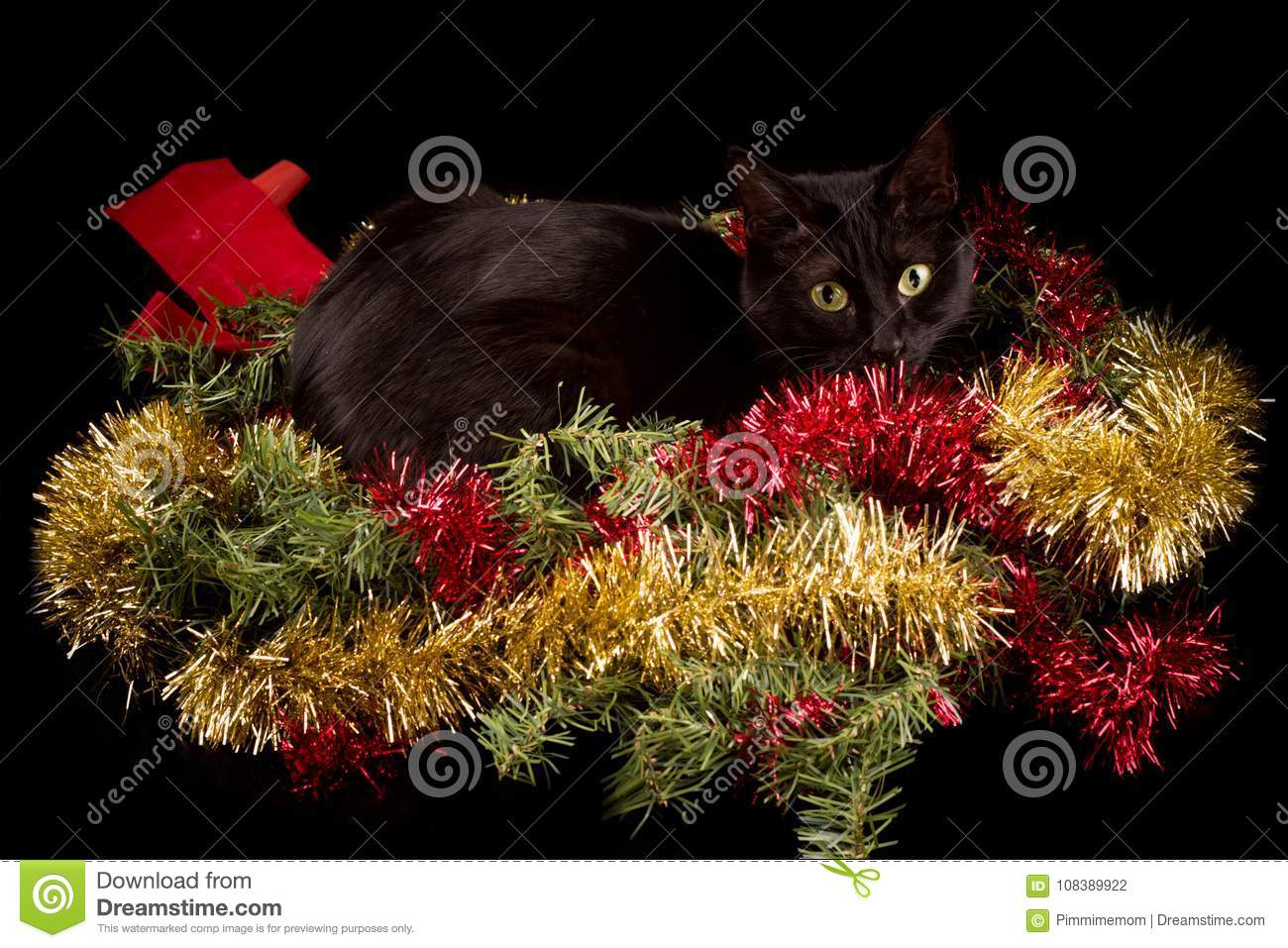download black cat hiding in christmas decorations wreath with red and gold tinsel stock photo