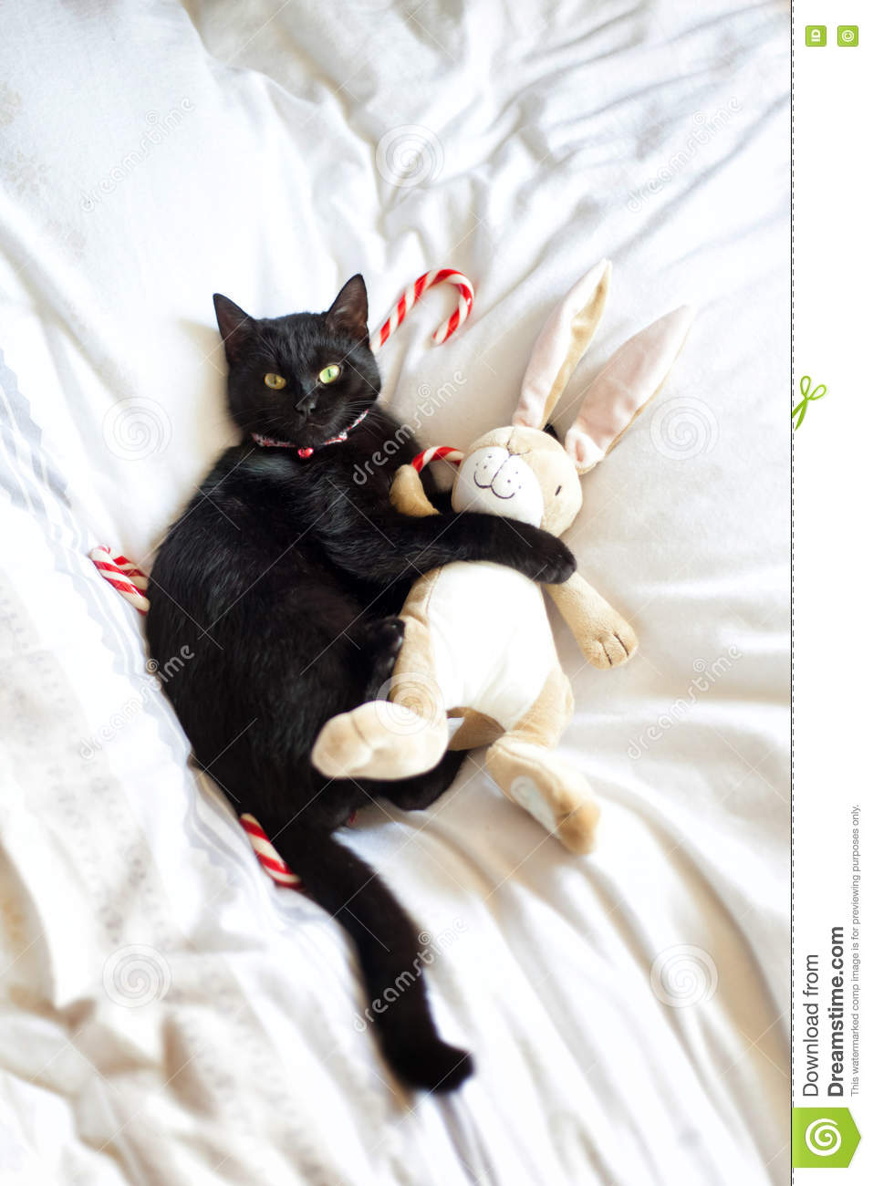 Black Cat Hugging A Stuffed Animal Stock Image Image Of Collar