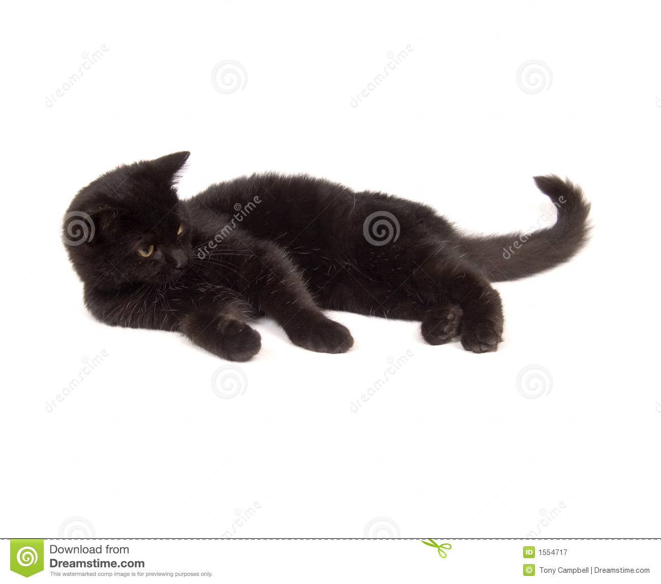black cat laying down royalty free stock photography
