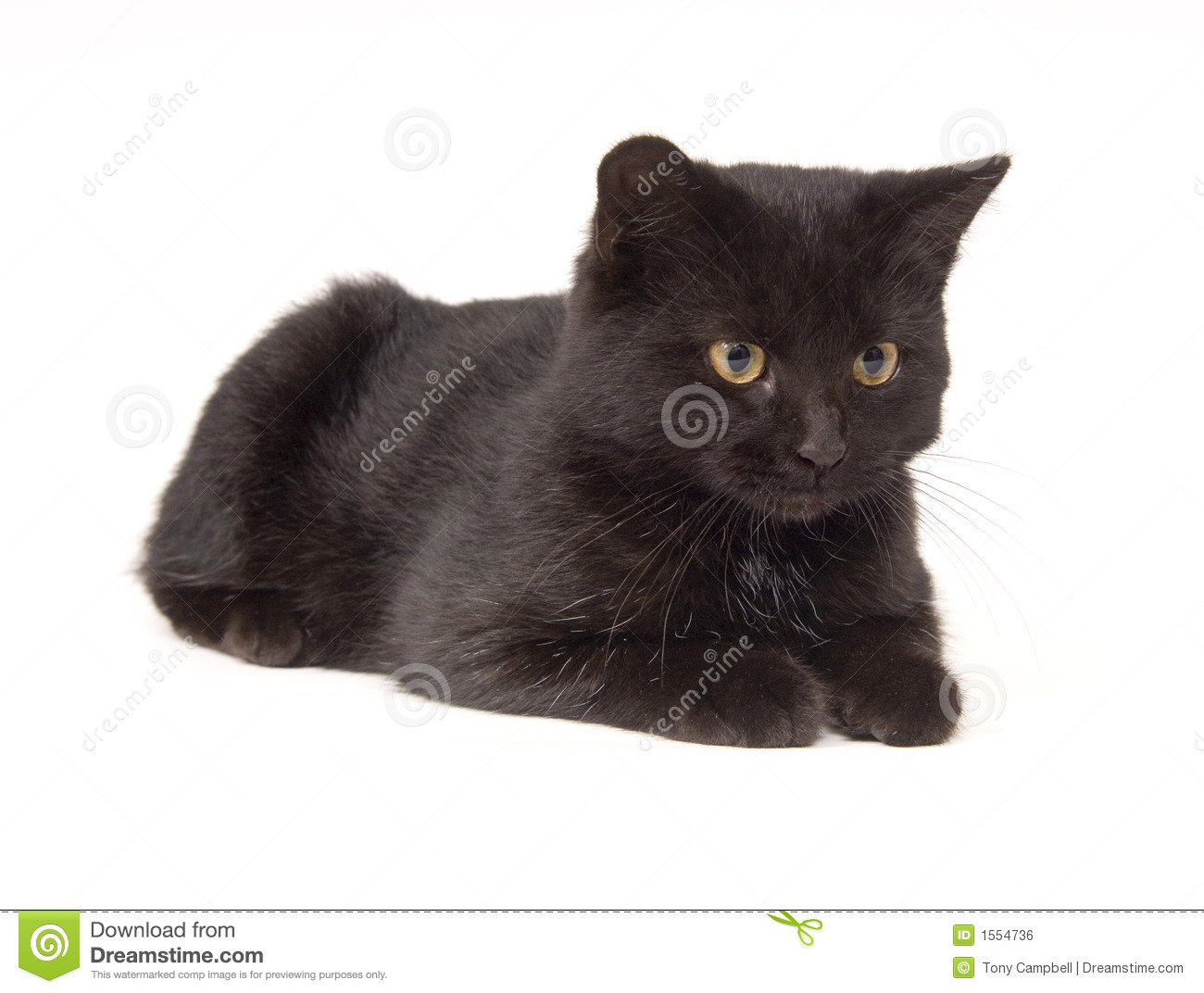 how long does the average cat live