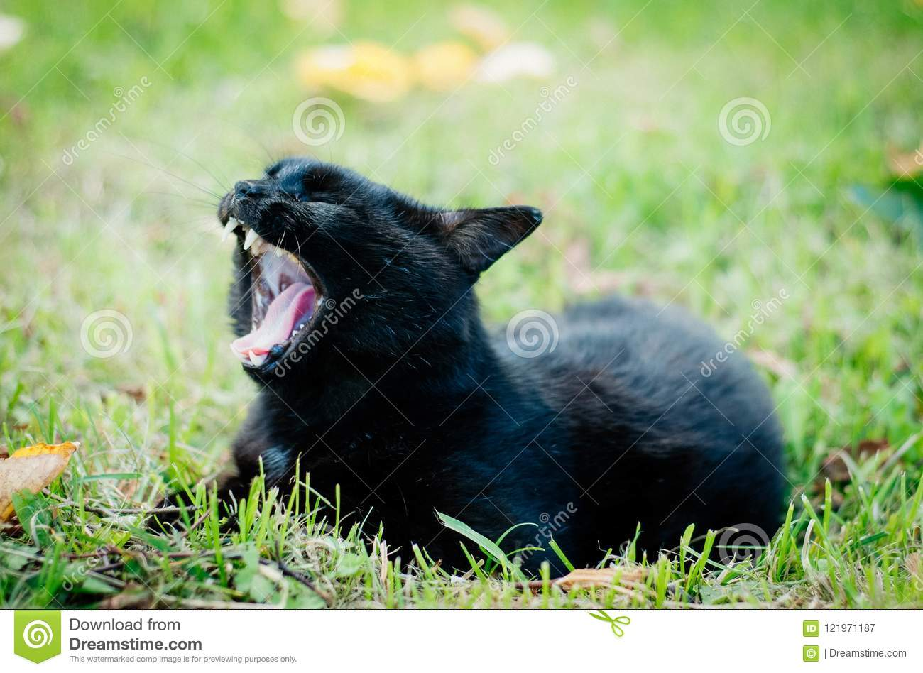 Black Cat Yawning On Green Grass Stock Image Image Of Green Lies