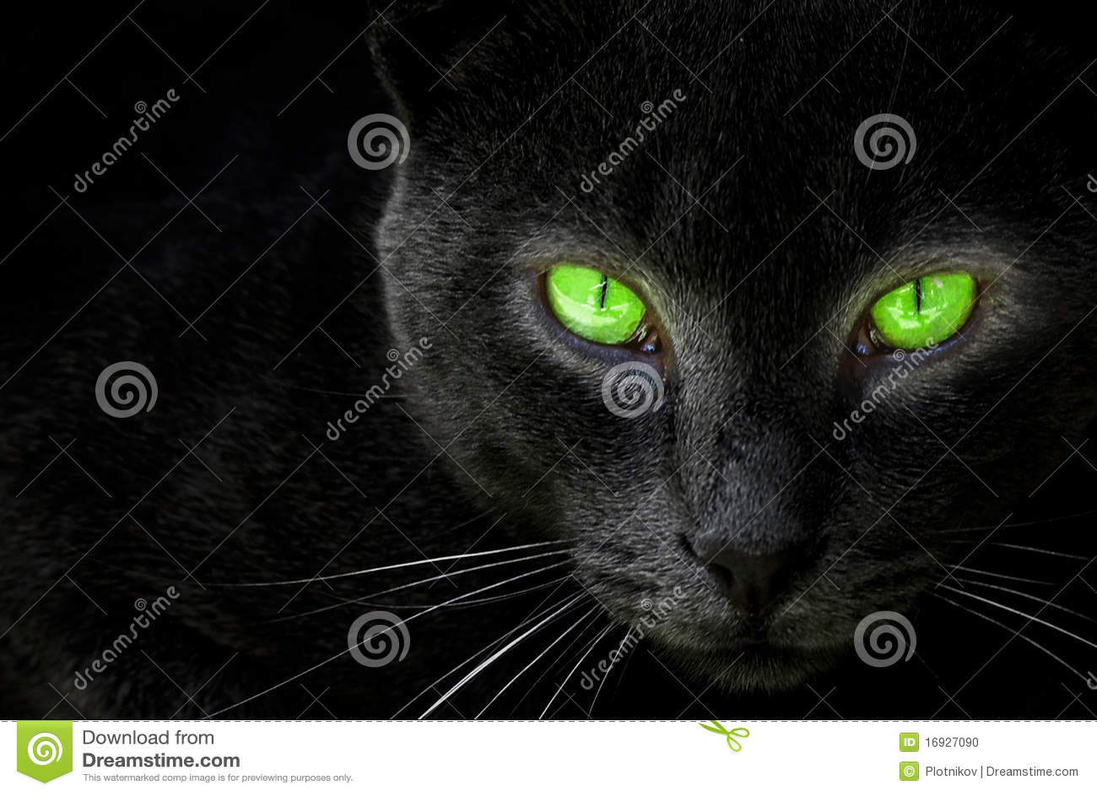 Black cat look in an lens.