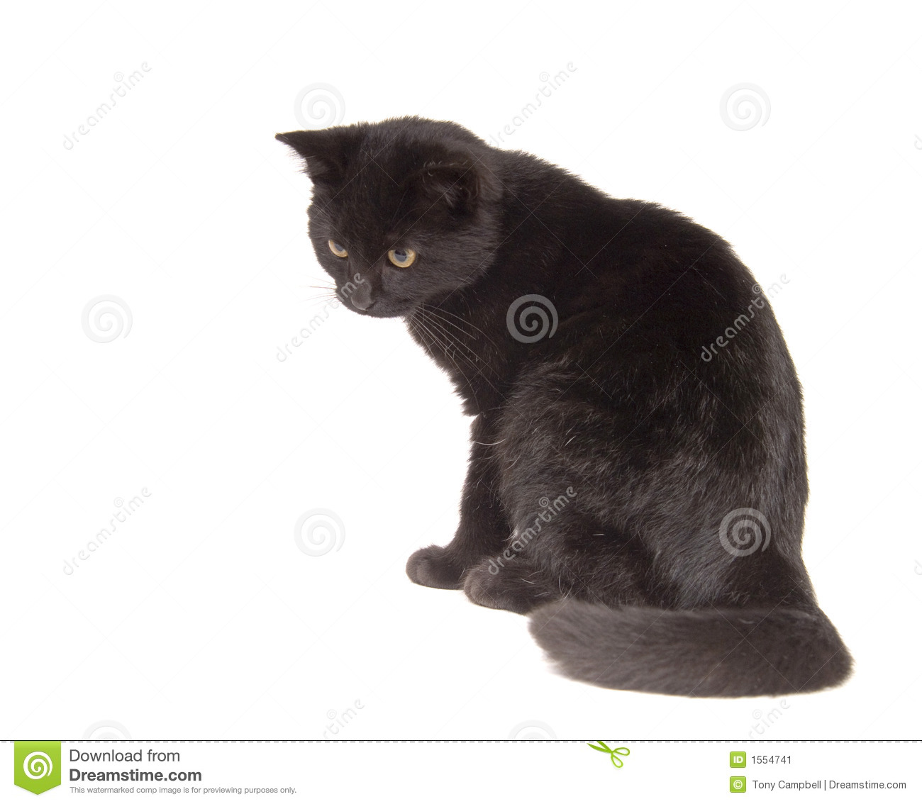 Black Cat Looking Down Ready To Pounce Stock Image