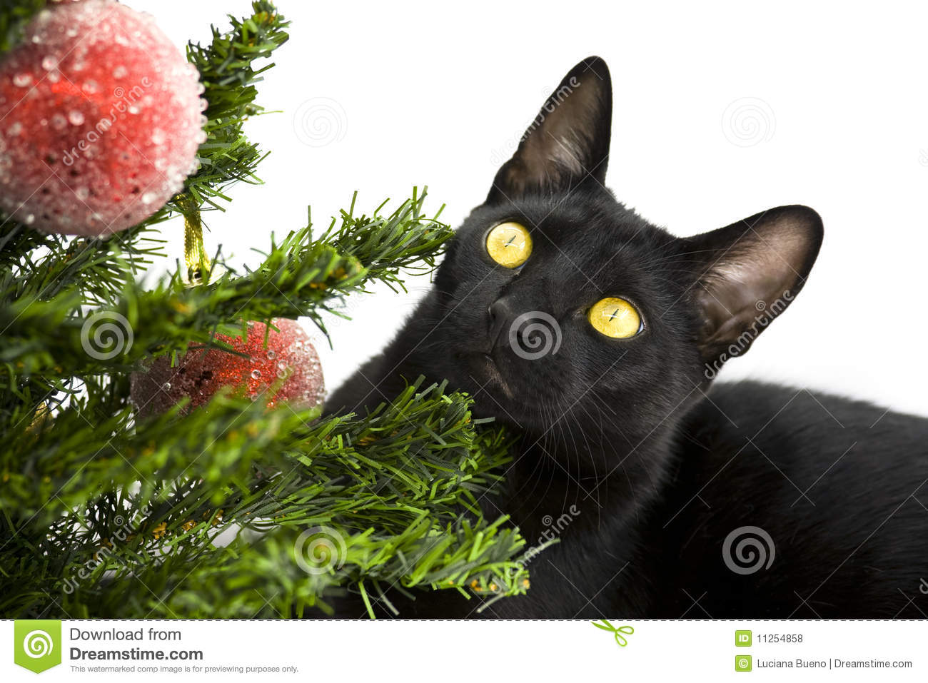 Black Cat Lying Under Christmas Tree Royalty Free Stock