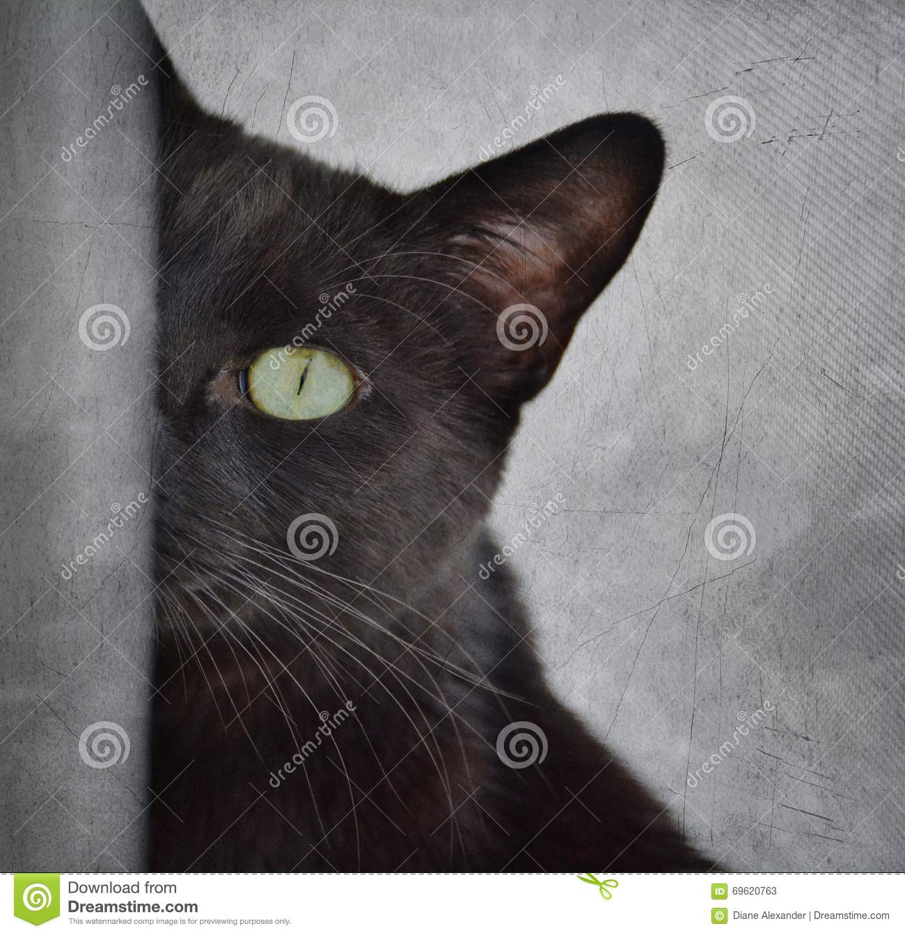 Black Cat Peeking Around Corner Stock Photo - Image: 69620763