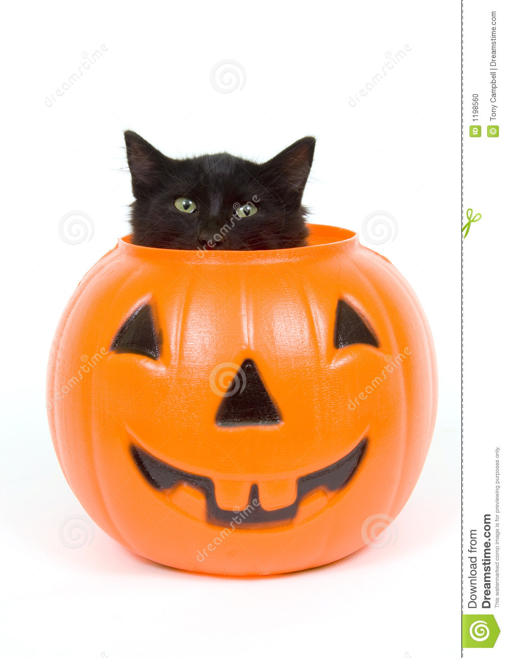 Beautiful Black Cat And Plastic Pumpkin   Halloween Stock Photo   Image Of Saints,  Cuty: 1198560