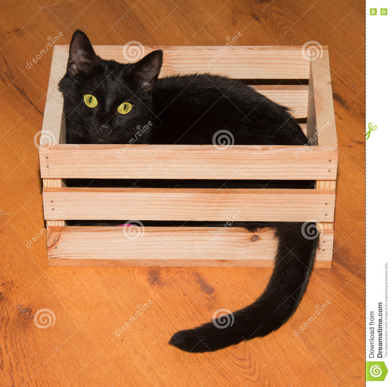 black-cat-playing-hiding-wooden-crate-lo
