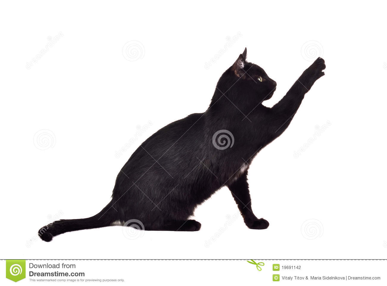 Black Cat Reaching Up For Toy Showing Claws Stock Photo