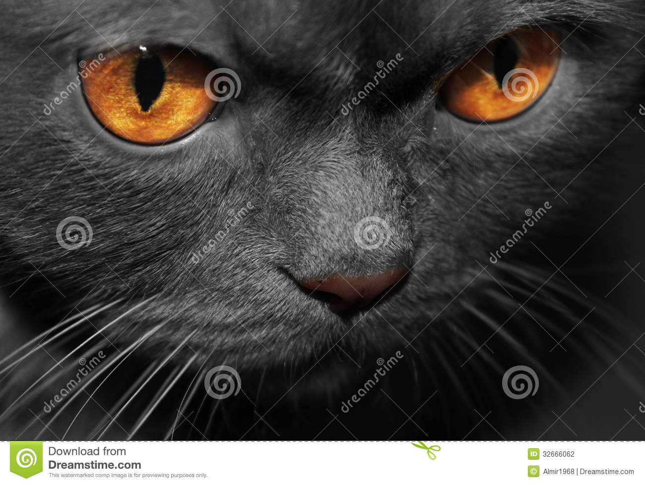 Black Cat With Pink Scary Eyes: Black Cat Stock Photography