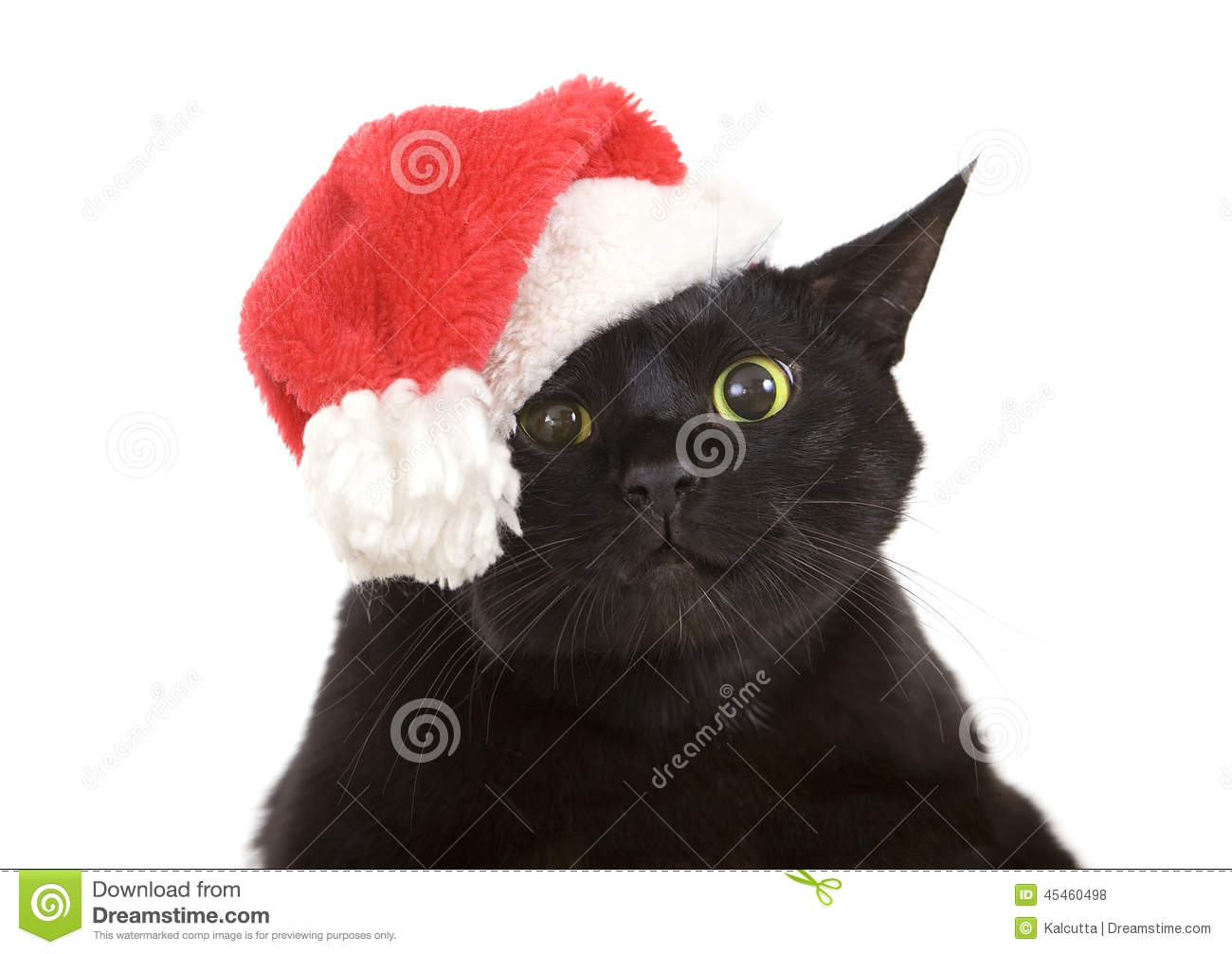black cat santa cute christmas cat christmas pet with santa c