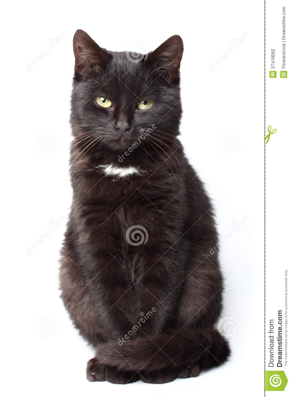 Black Cat Sitting Stock Photography - Image: 27418082