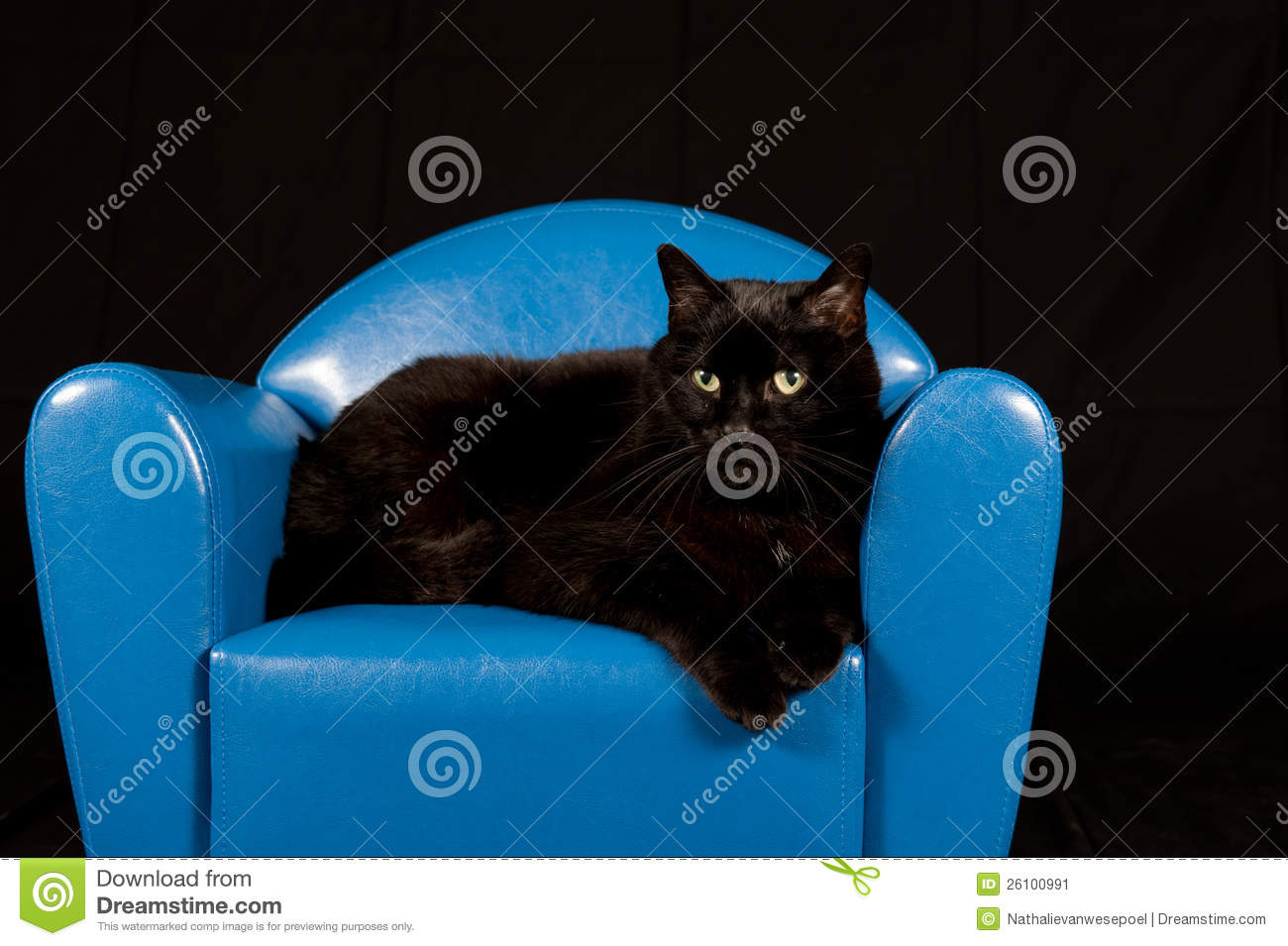Black Cat Sitting In A Blue Mini Chair Stock Image Image