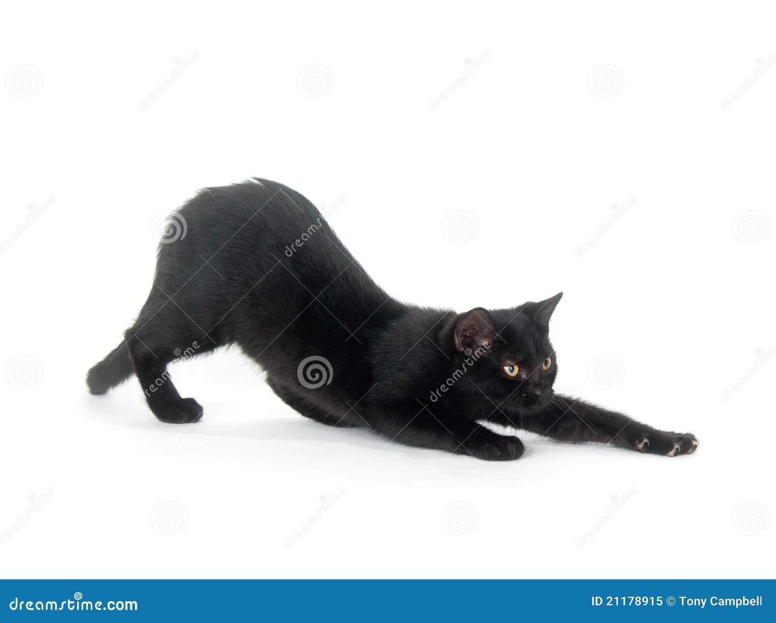 Black cat stretching on white