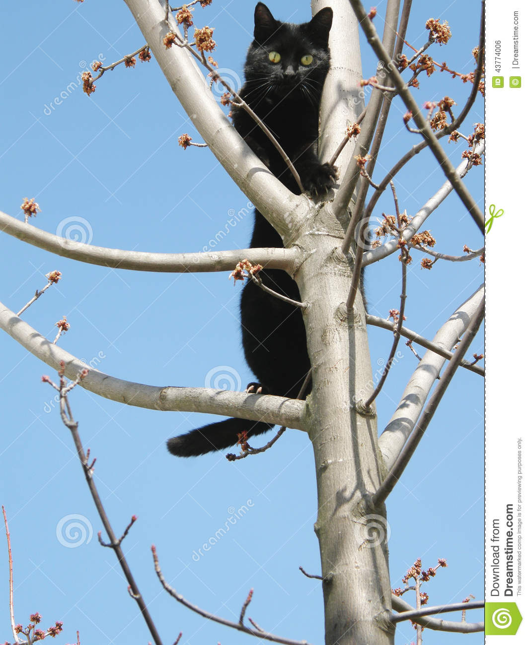 black cat in tree stock photo image 43774006. Black Bedroom Furniture Sets. Home Design Ideas