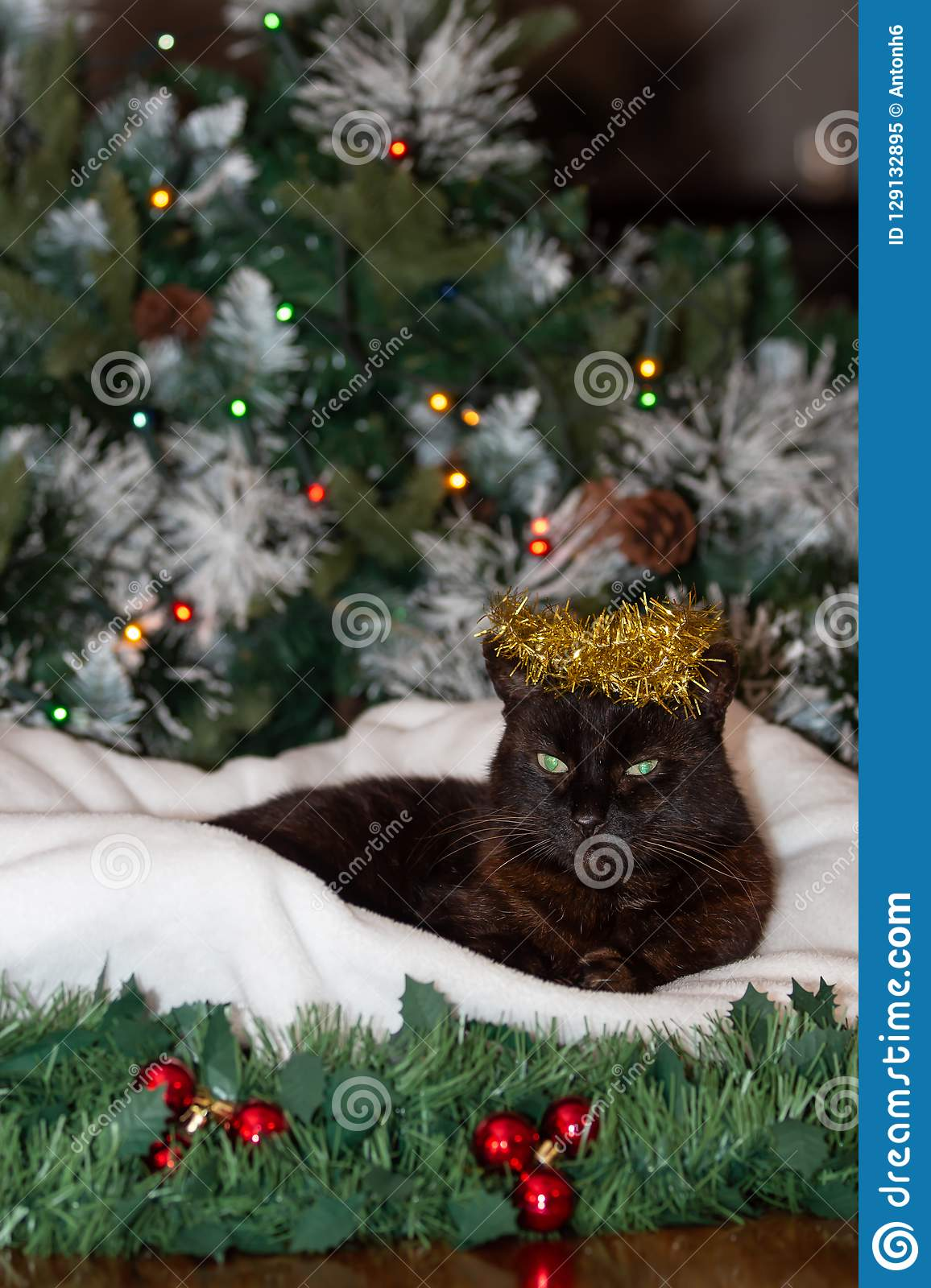 a black cat wearing a crown of golden christmas decoration