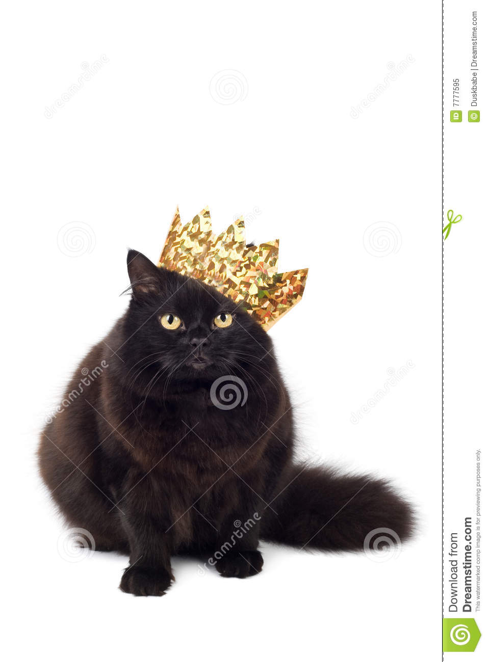 black cat wearing golden crown isolated royalty free stock free crown clipart without background free crown clipart for cricut