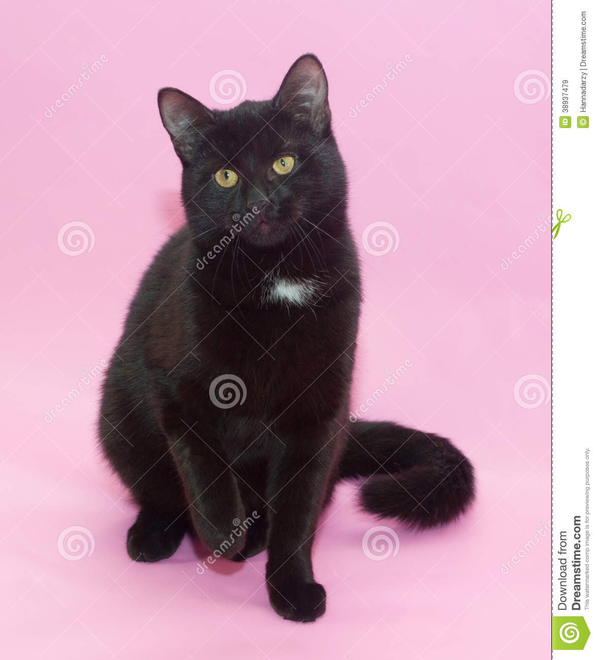 Black Cat With White Spot On The Chest Sitting Stock Photo
