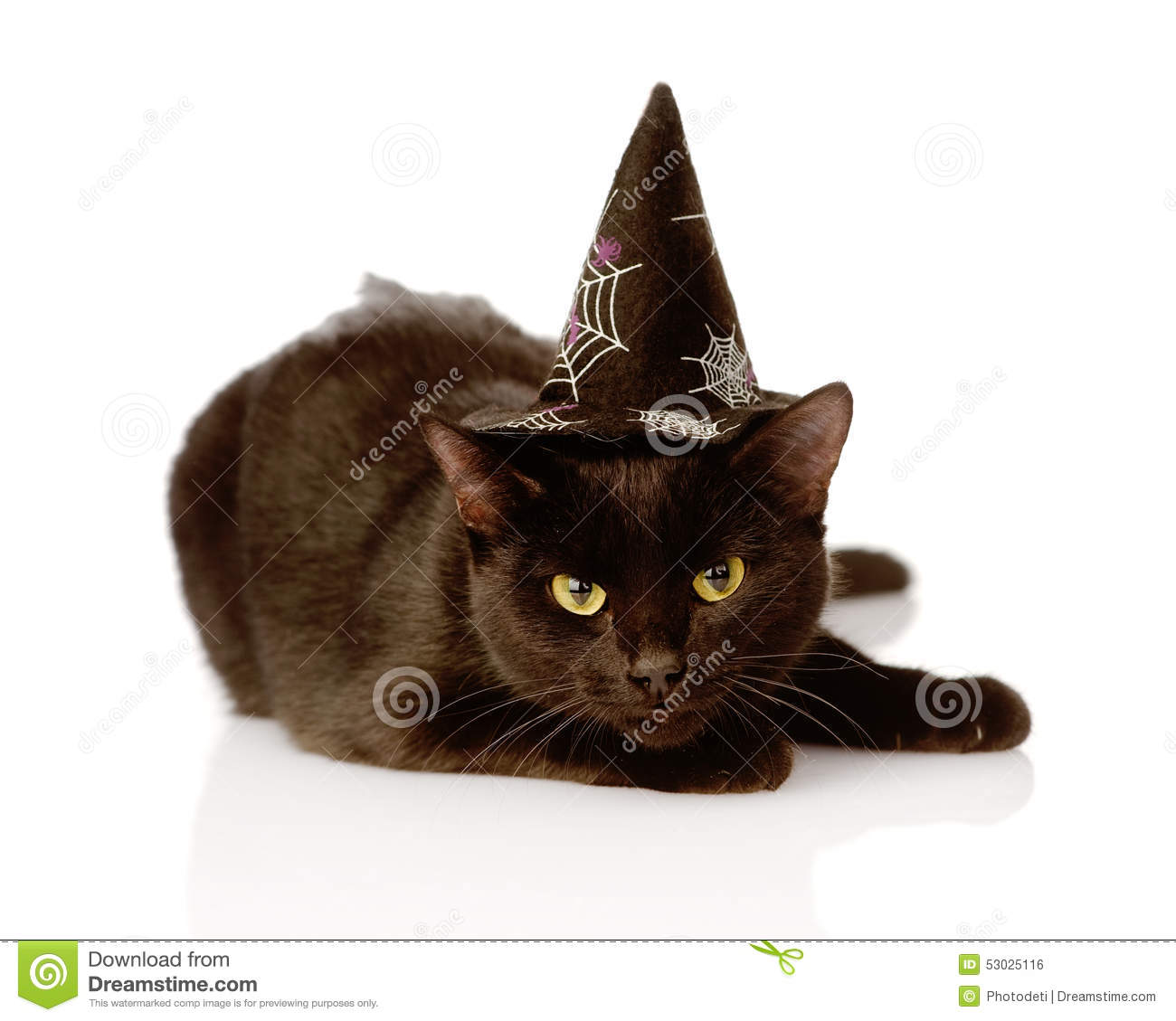 black cat with witch hat for halloween isolated on white stock photo image 53025116. Black Bedroom Furniture Sets. Home Design Ideas