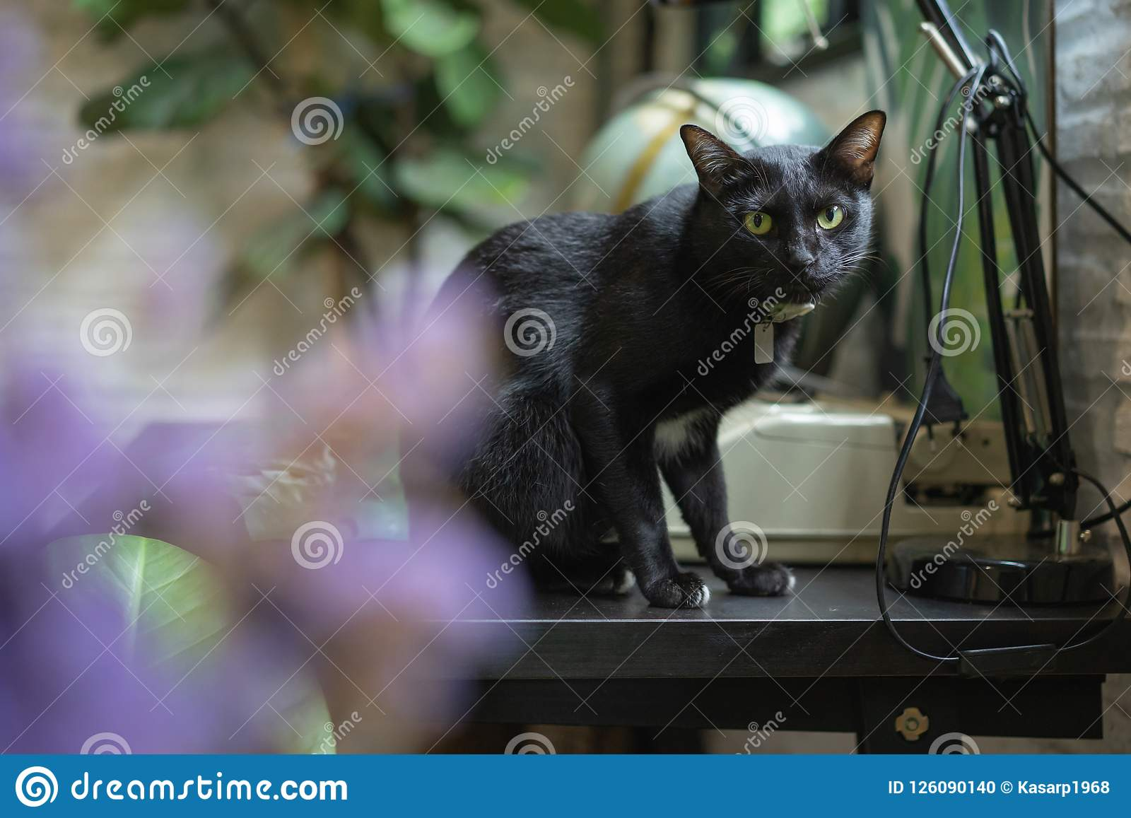 Black cat on wooden table