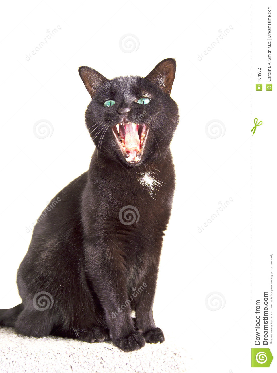 Black Cat Yawn Stock Photo Image Of Green Background 104932