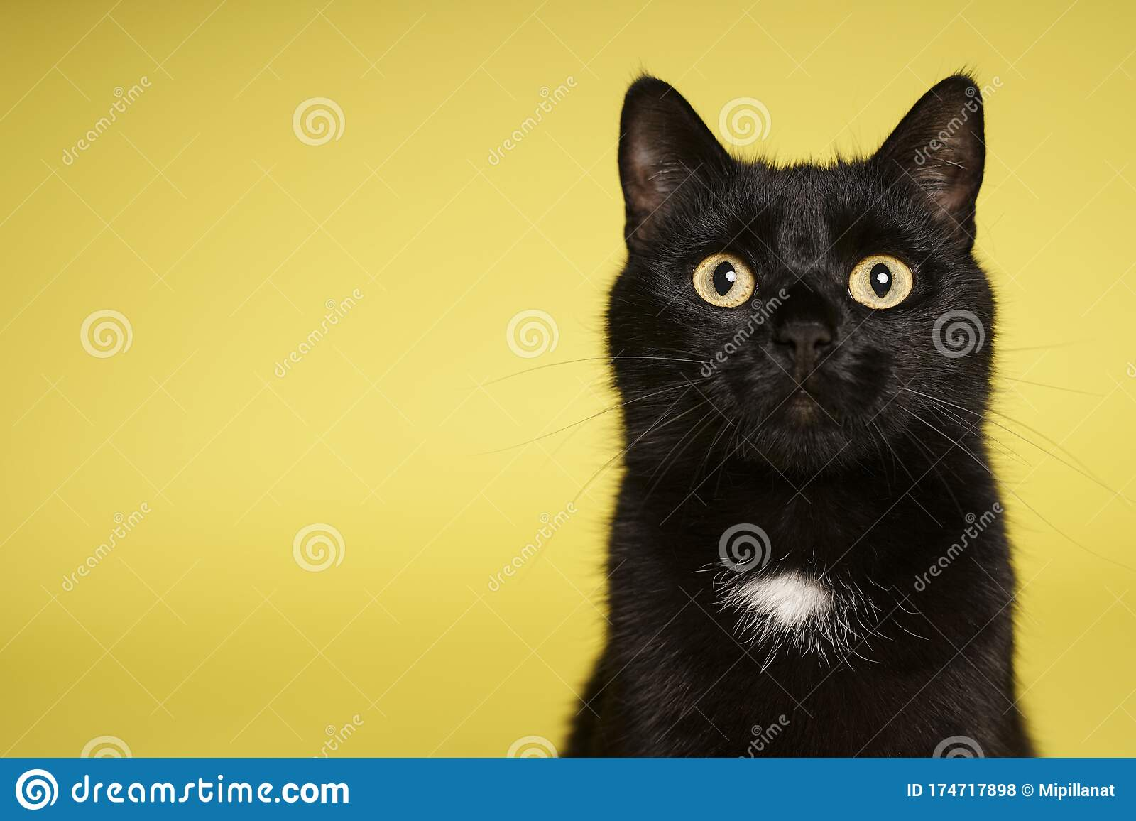 Black Cat On Yellow Background Friday 13th Stock Photo Image Of 13th Black 174717898