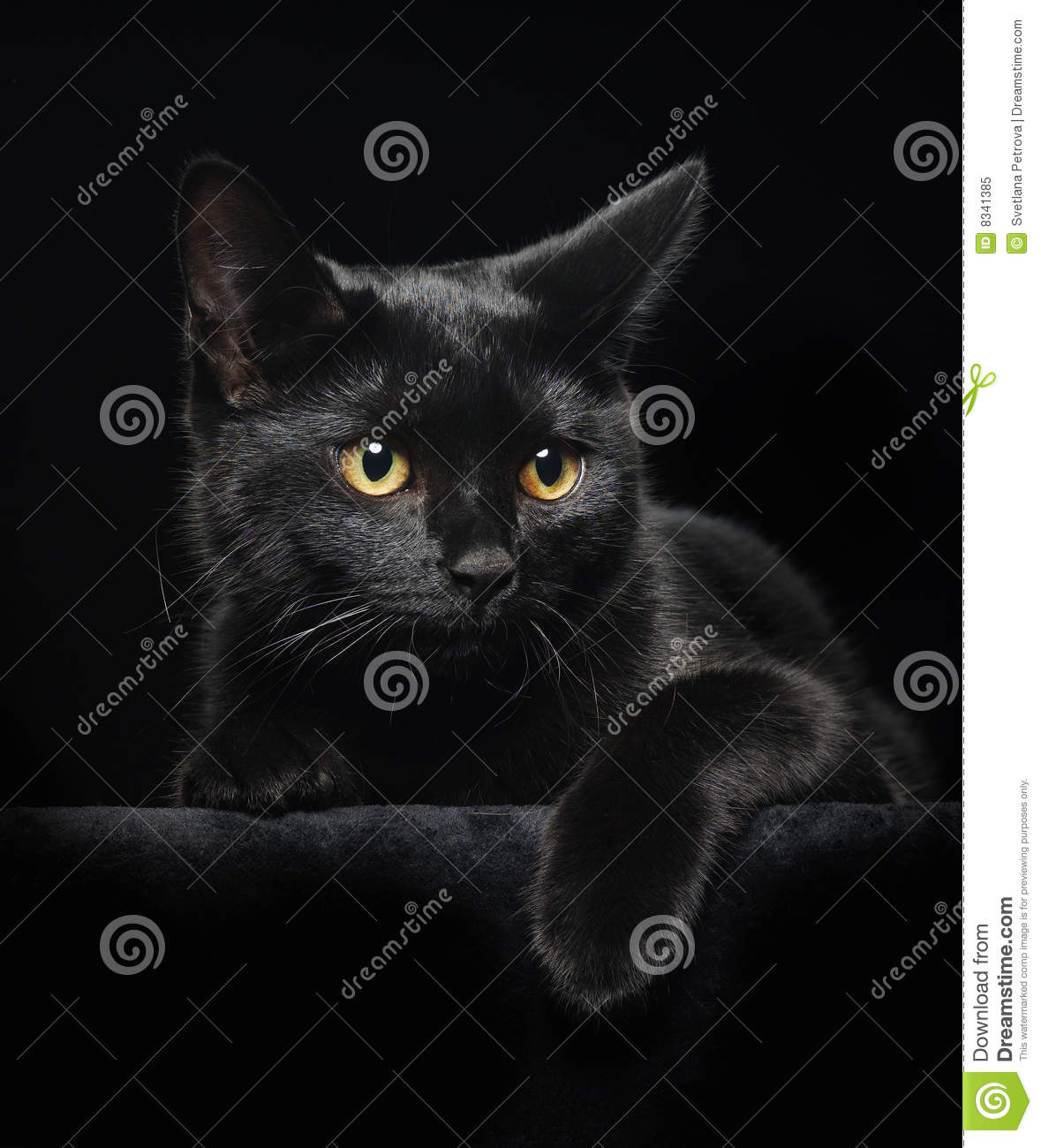 black cat yellow eyes 8341385 black cat with yellow eyes stock image image of domestic 8341385