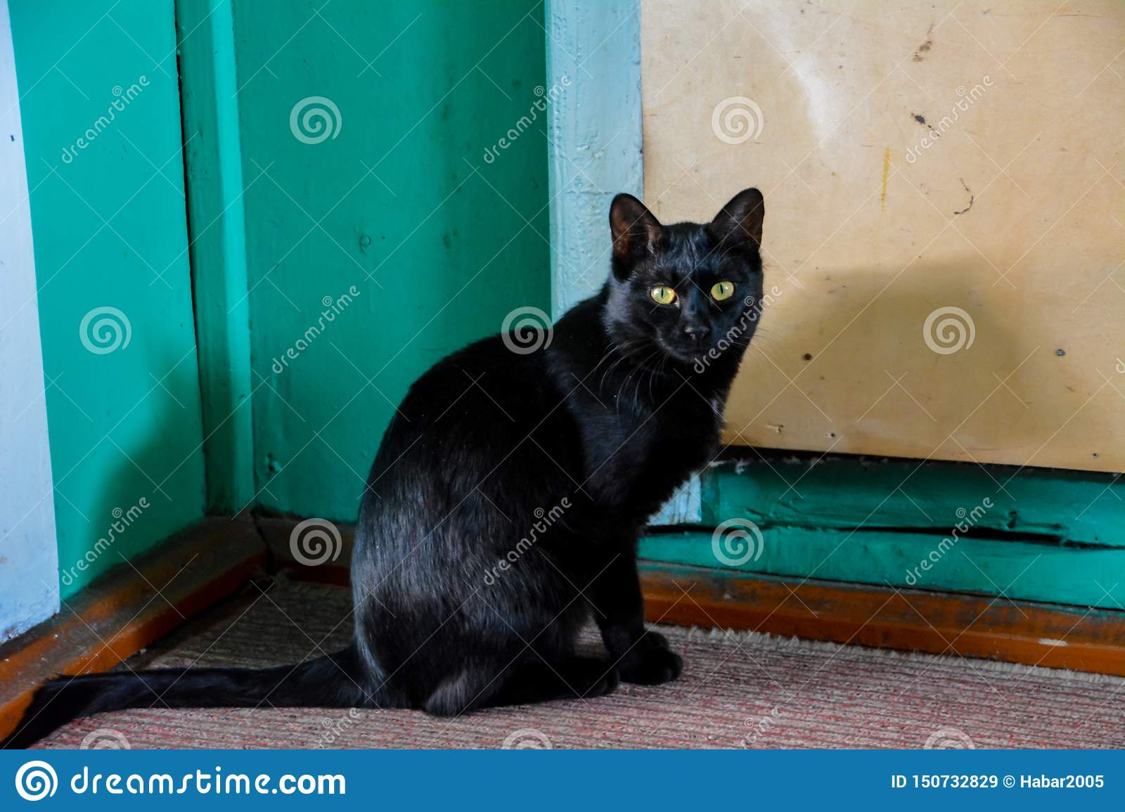 The black cat with yellow eyes.
