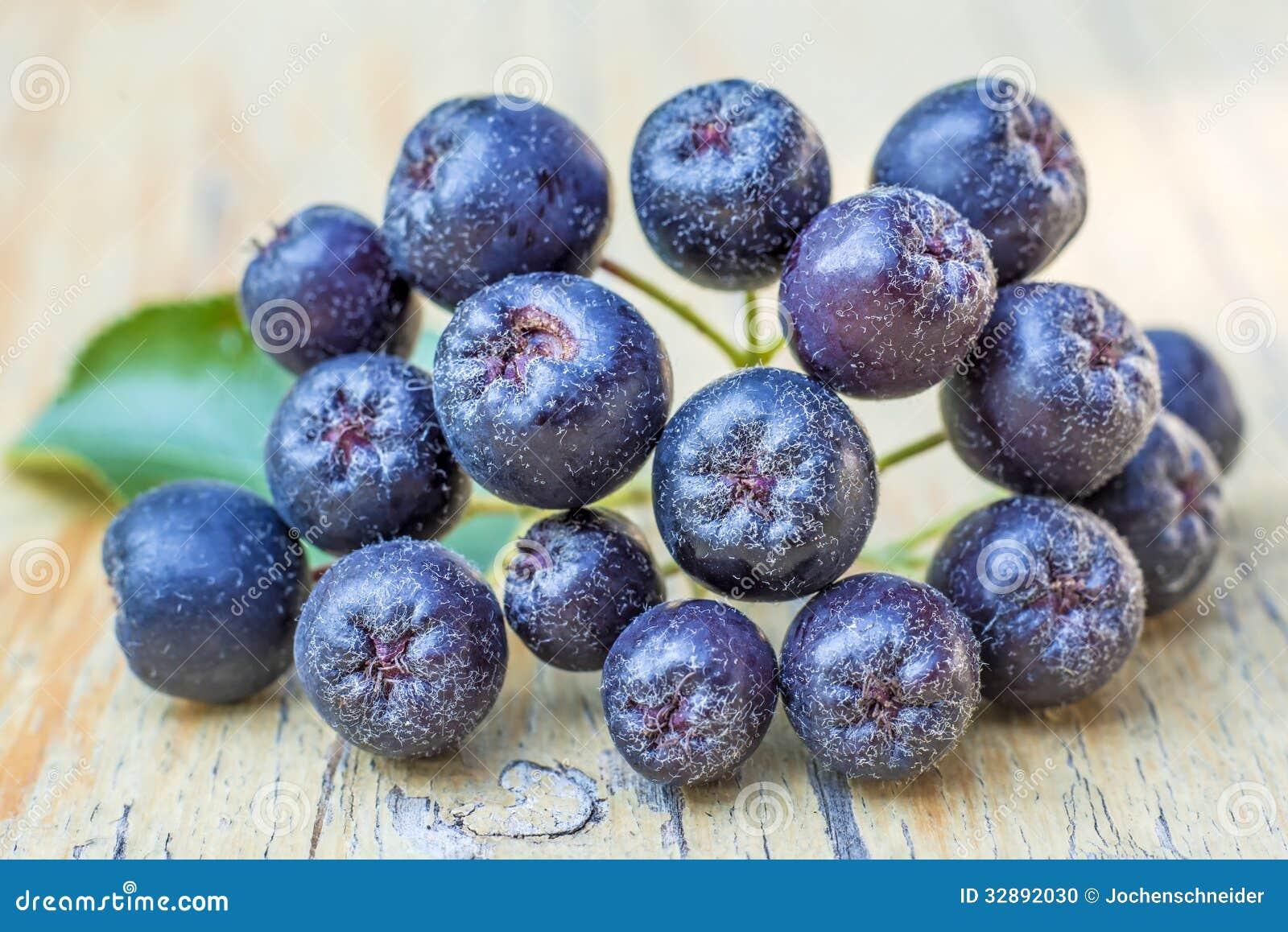 Black choke berry