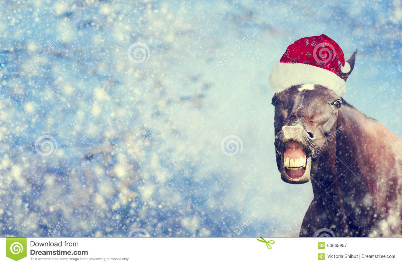 Black Christmas horse with Santa hat smiling and looking into camera on winter snowflakes background , banner,