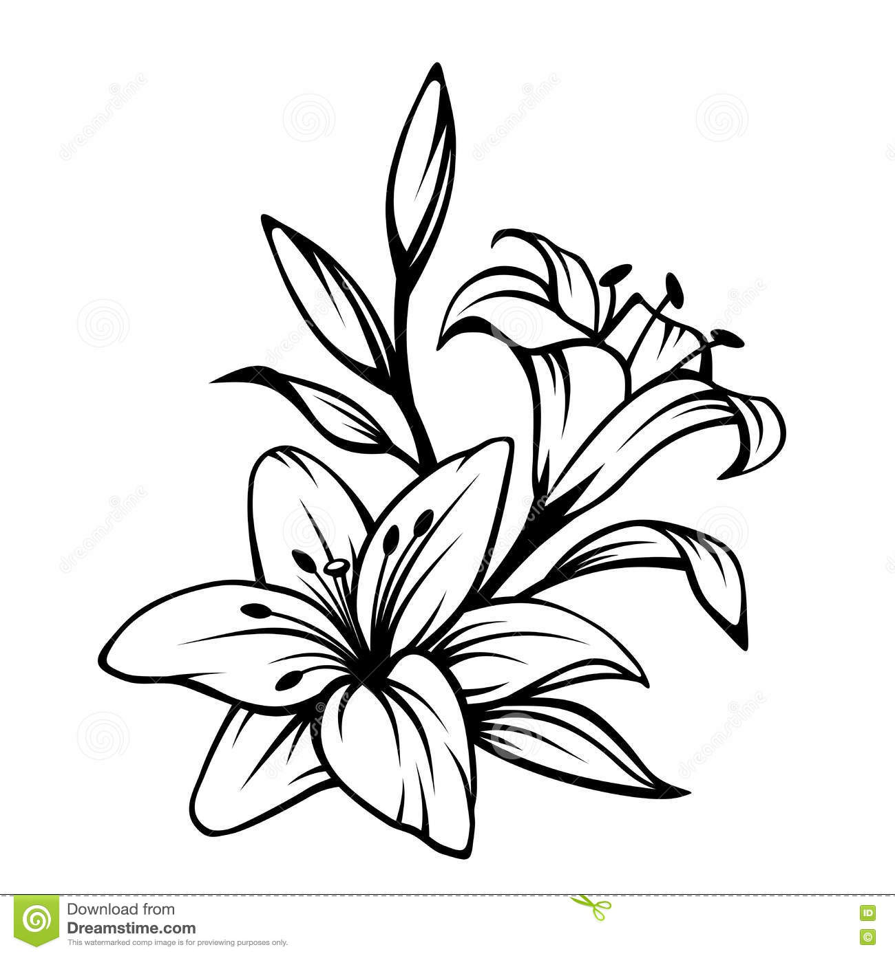 Black And White Lily Outline | www.imgkid.com - The Image ...