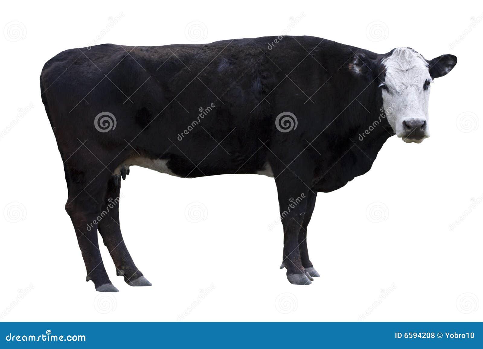 Black Cow cutout