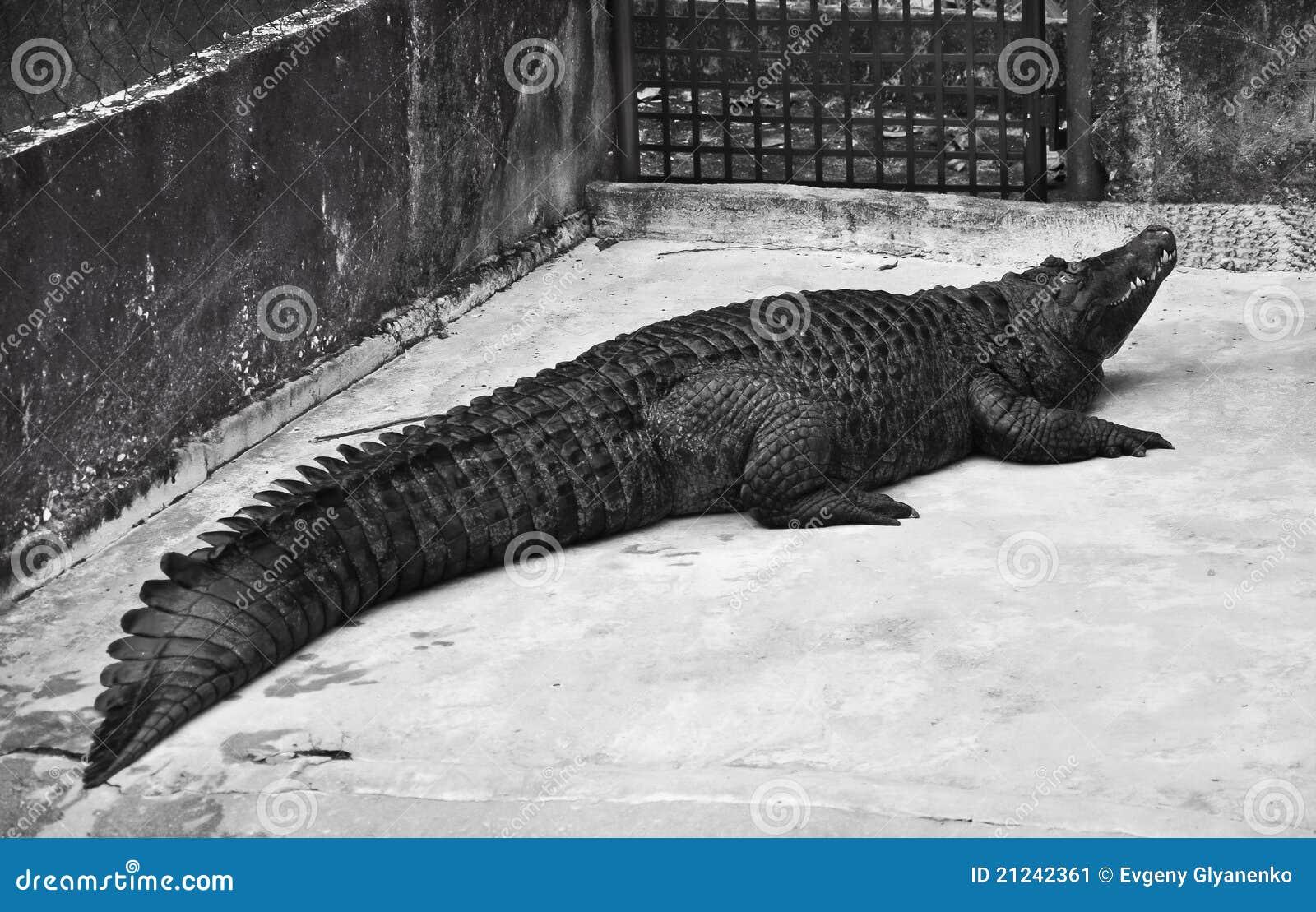 2441021849 furthermore Tempat Menarik Di Selangor together with Foldify Zoo Ipad Bouwplaten Dieren Inkleuren Knutselen besides Rappy Reminisces On Zoo Tycoon 2 likewise Mixed Cool Desktop Wallpapers Free. on 3d zoo animals