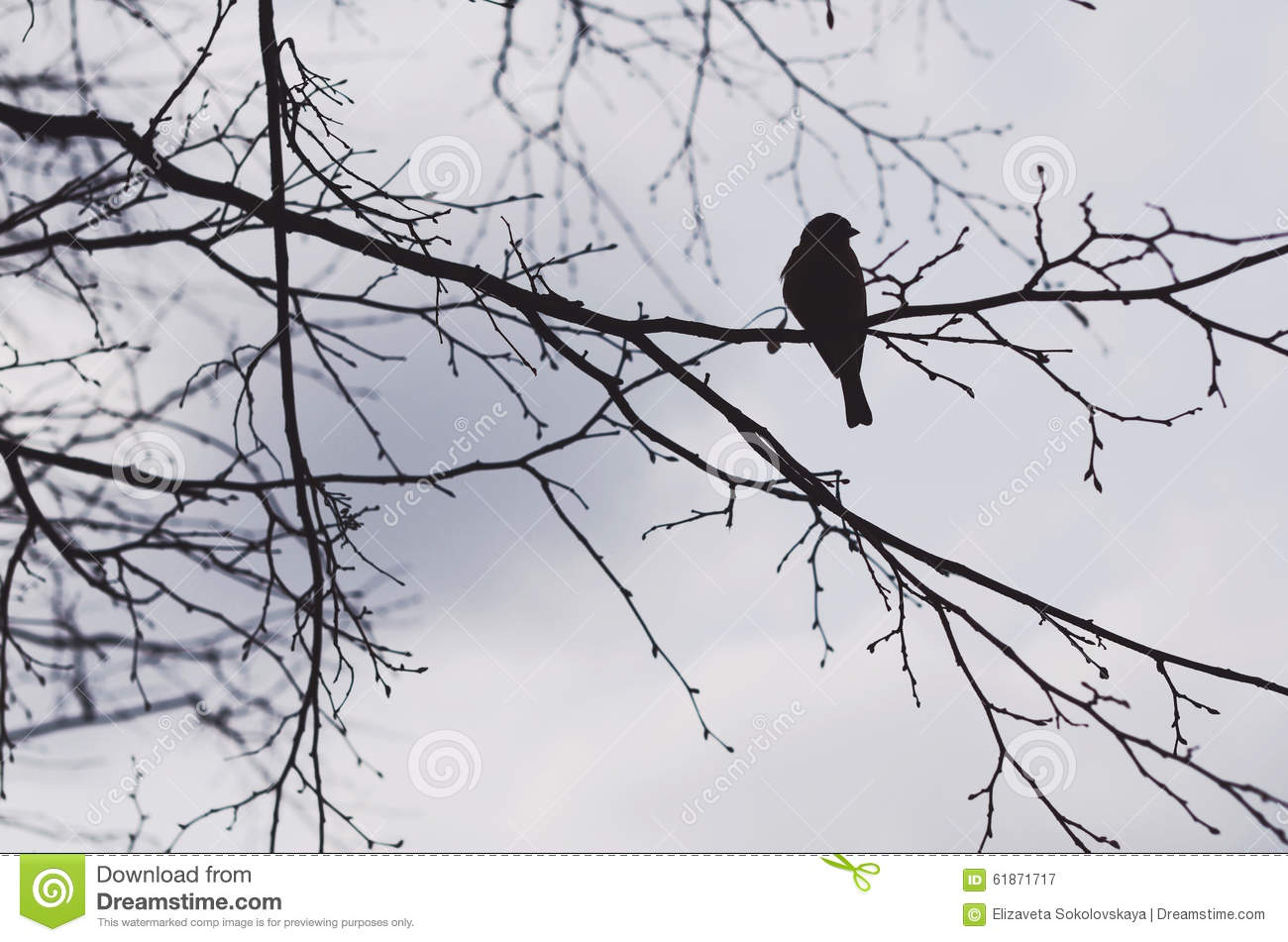 Black Crow Sitting On A Tree Branch, Silhouette Stock ...