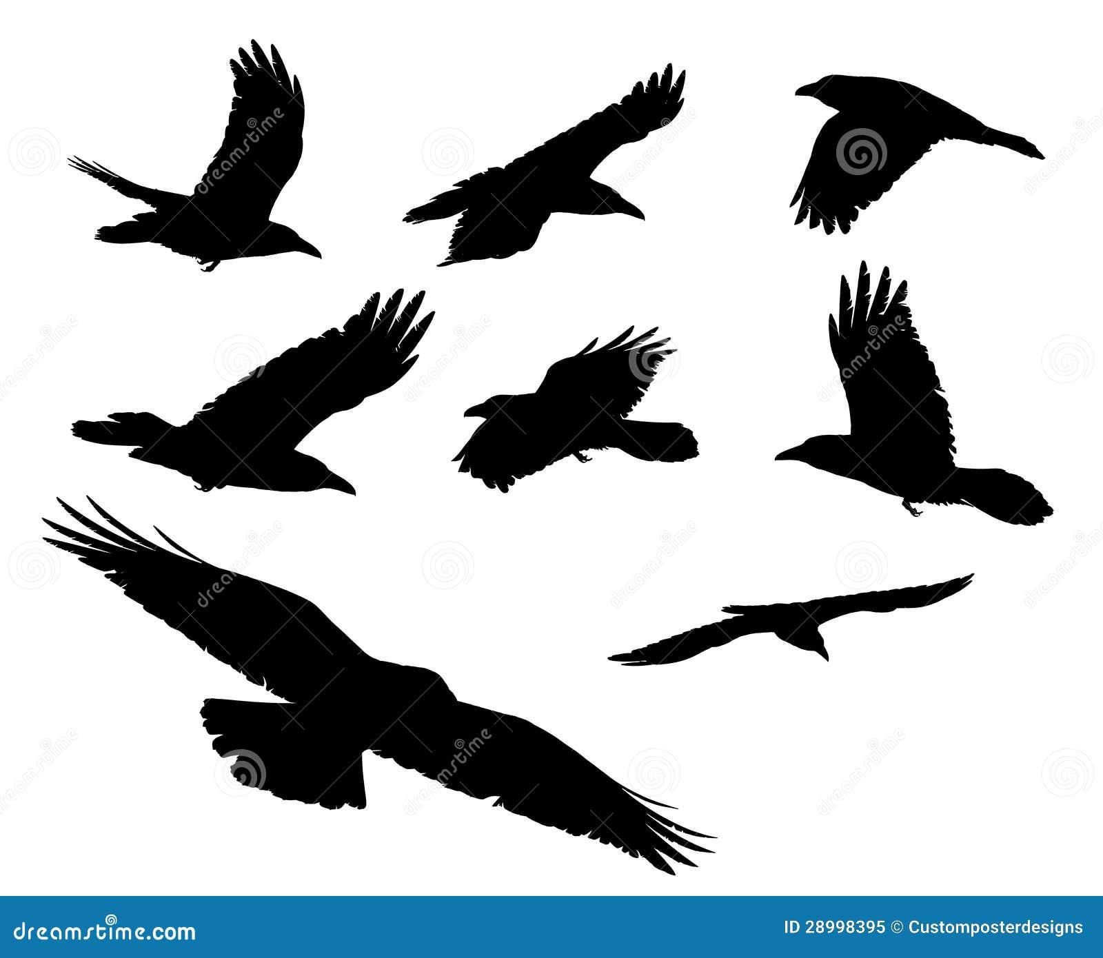 black crows royalty free stock photo image 28998395