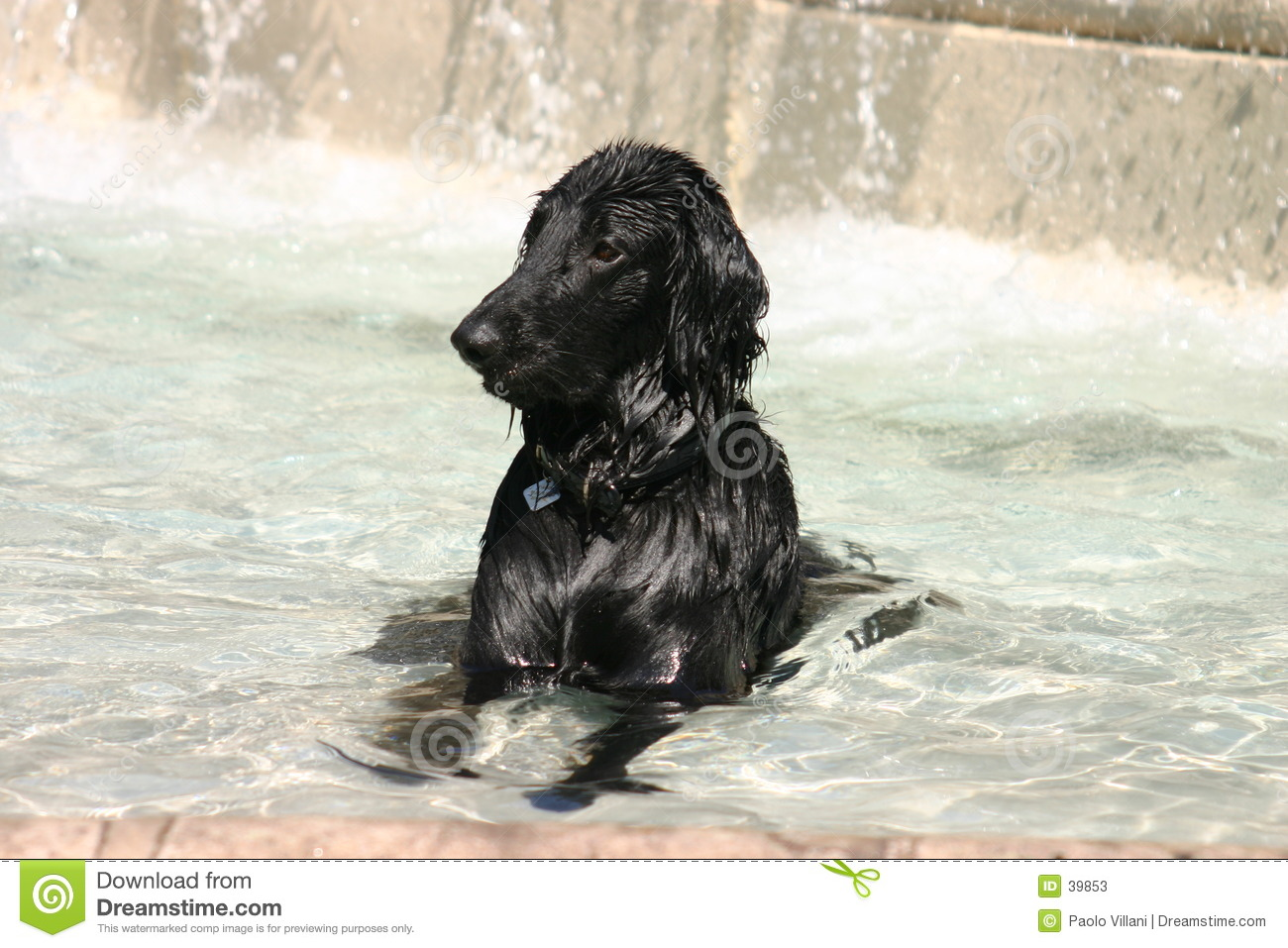 Black dog dipped in a fountain