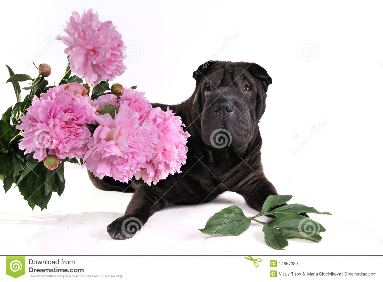 Black Dog with Flowers
