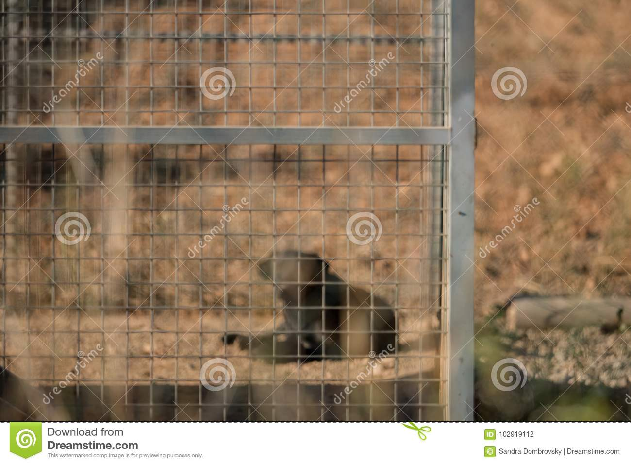 Black dog in the kennel