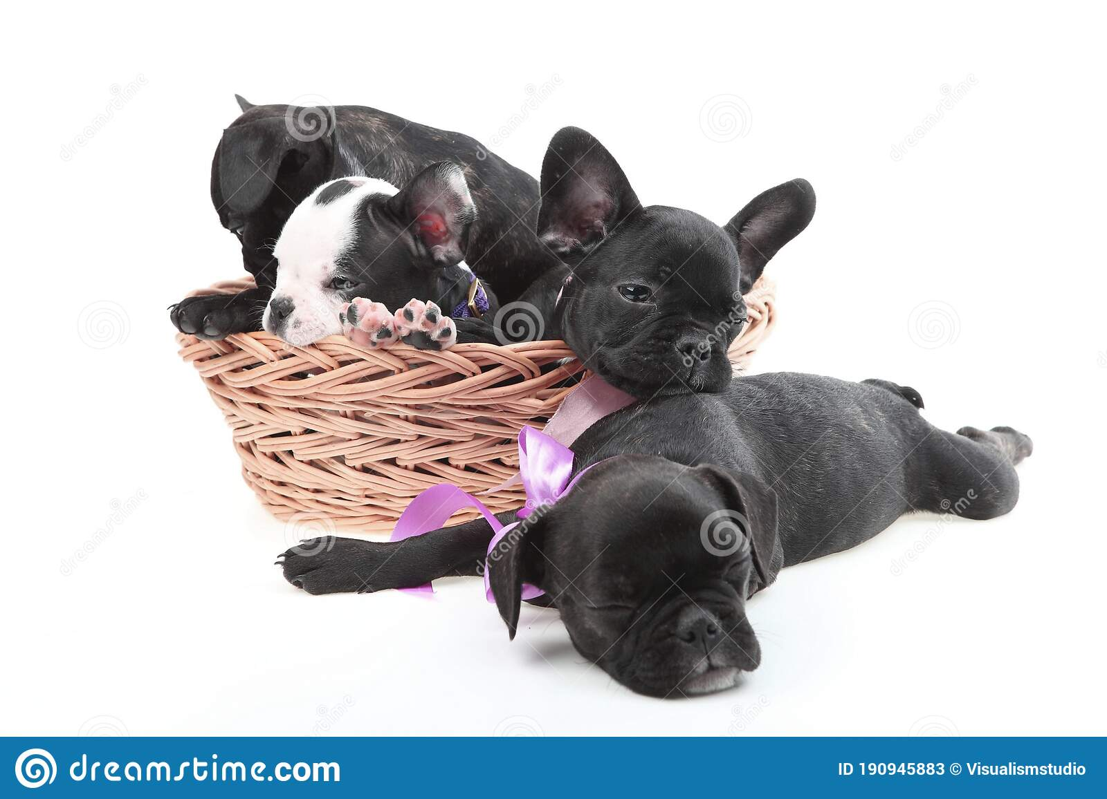 Black Dog Puppies Funny Smiling Puppy Dog A Paw And Cute Puppy On White Stock Image Image Of Canine Brown 190945883