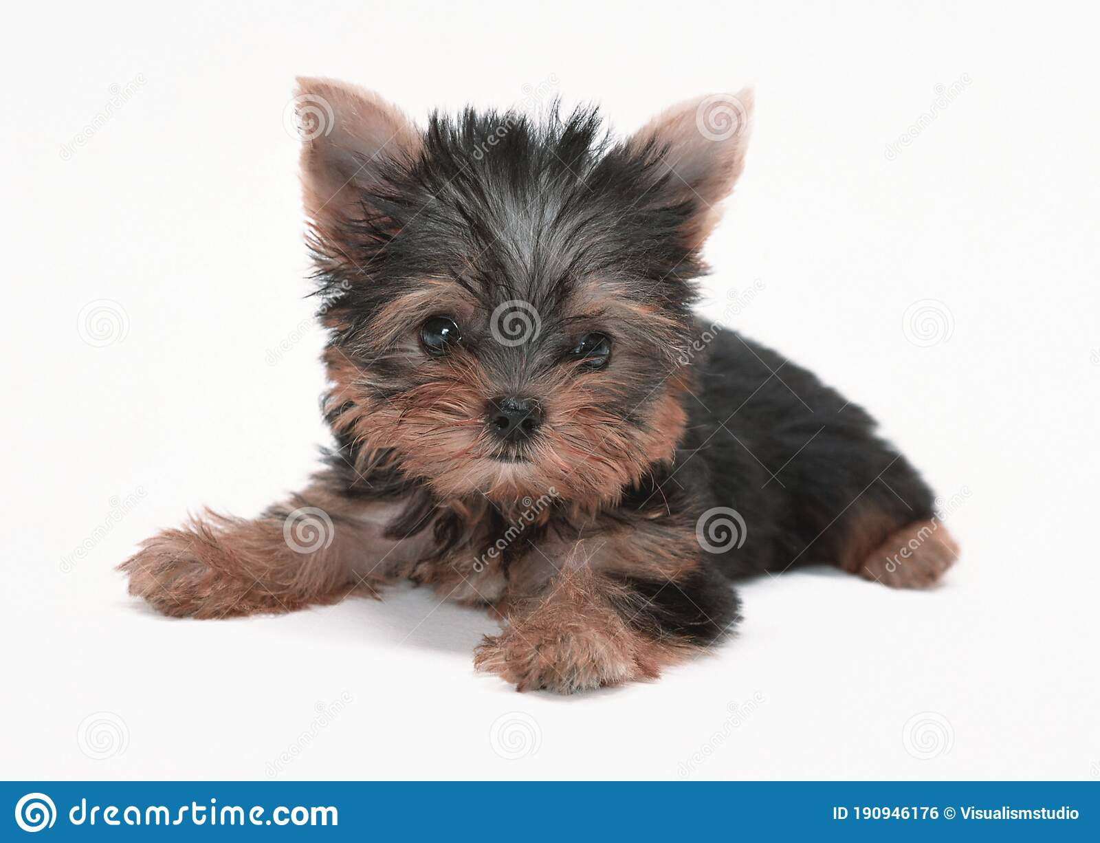 Black Dog Puppies Funny Smiling Puppy Dog A Paw And Cute Puppy On White Stock Photo Image Of Design Care 190946176