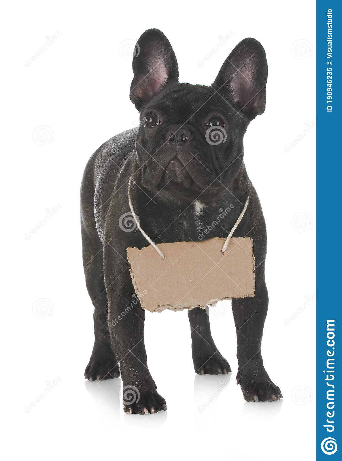 Black Dog Puppies Funny Smiling Puppy Dog A Paw And Cute Puppy On White Stock Image Image Of Design Funny 190946235