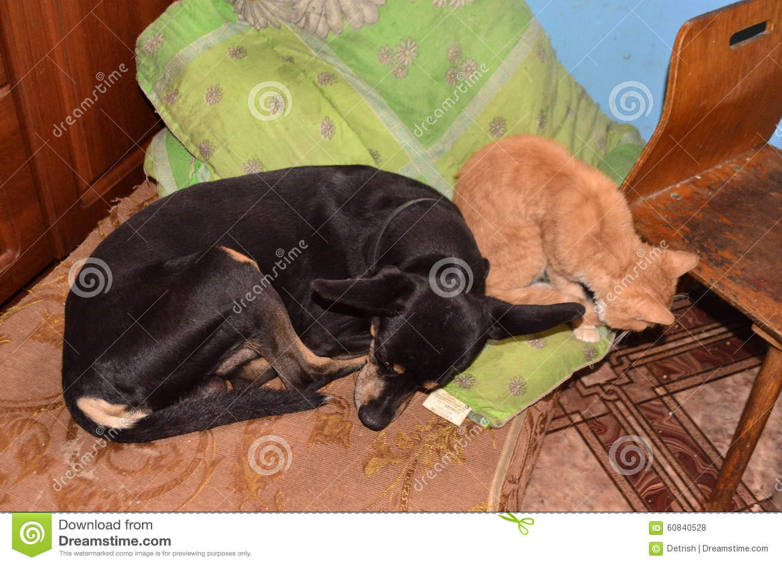 red cat kitchen oak bluffs images | 4moltqa