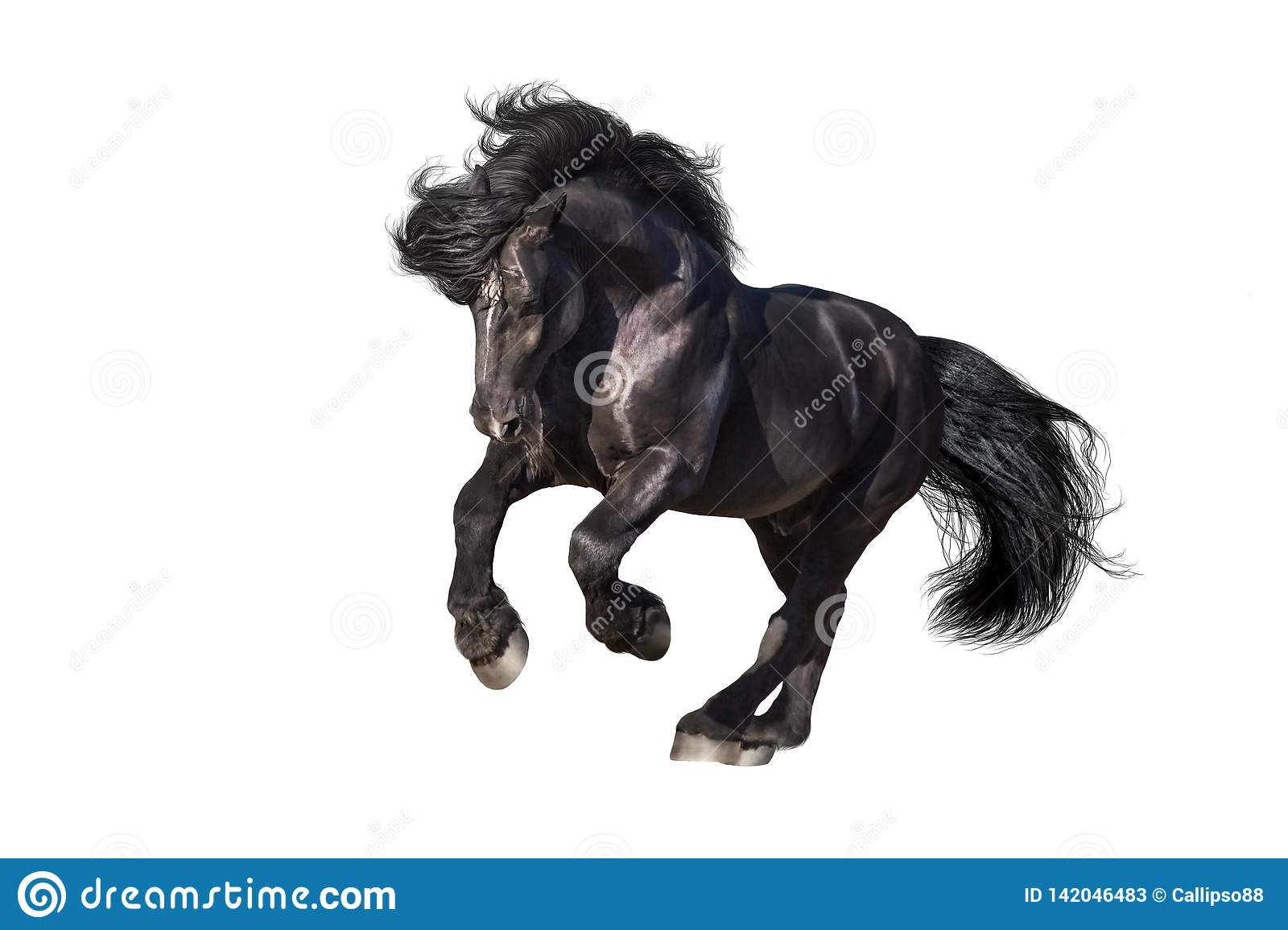 Black Draft Horse Galloping Isolated Stock Image Image Of Fast Racing 142046483