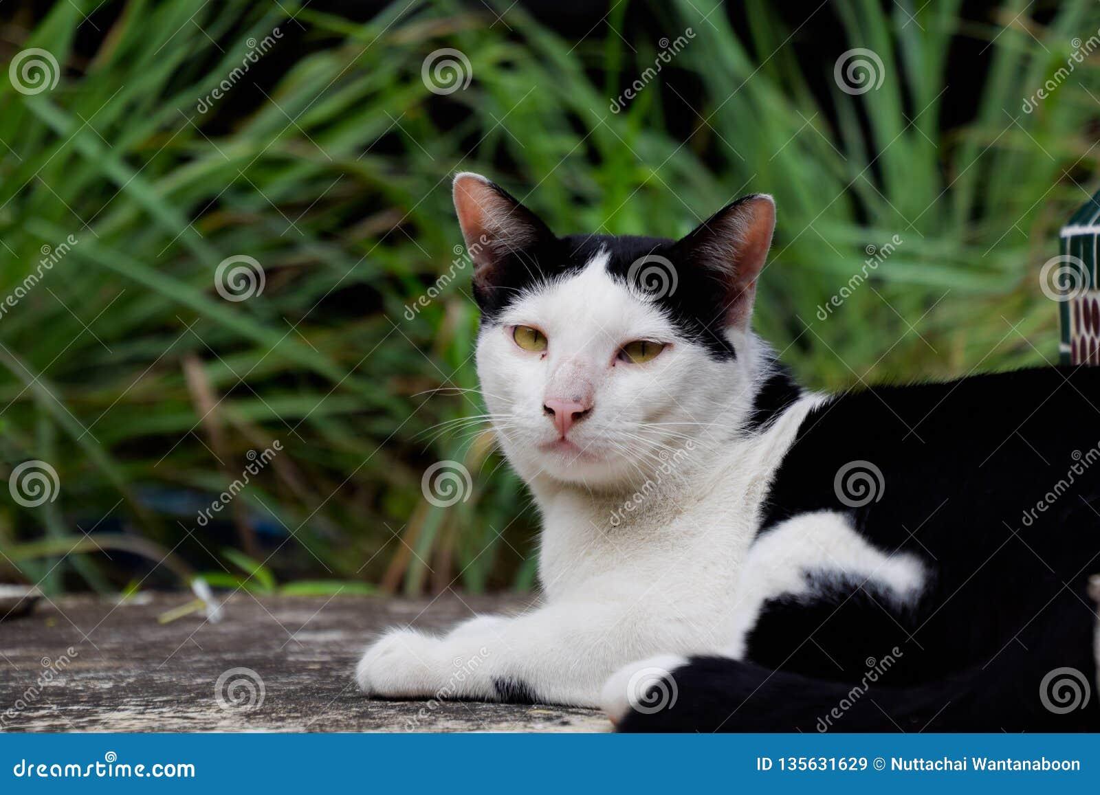 Black feline white