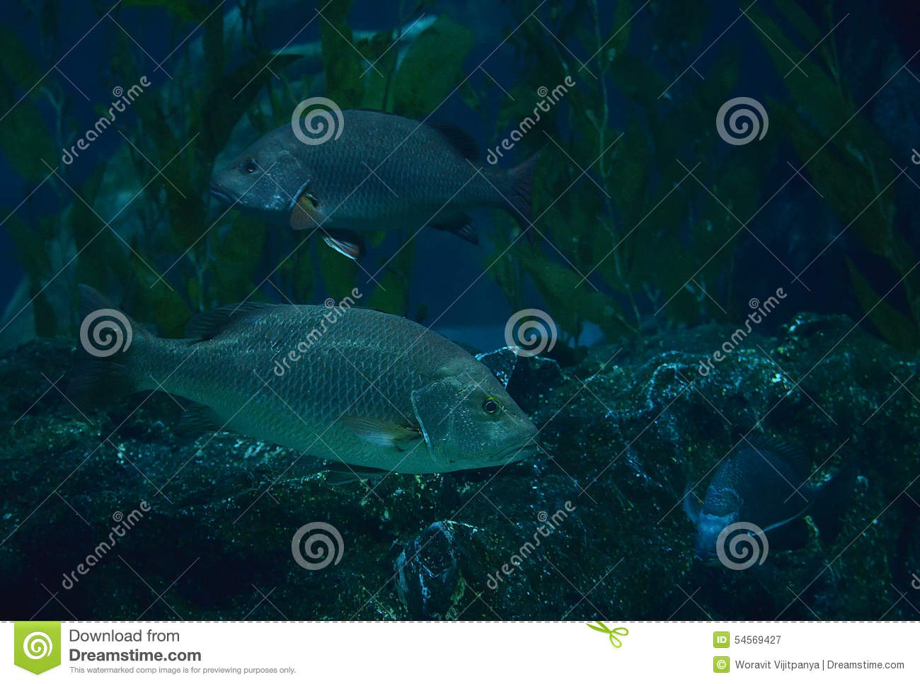 Black fish stock photo image 54569427 for Dream of fish swimming